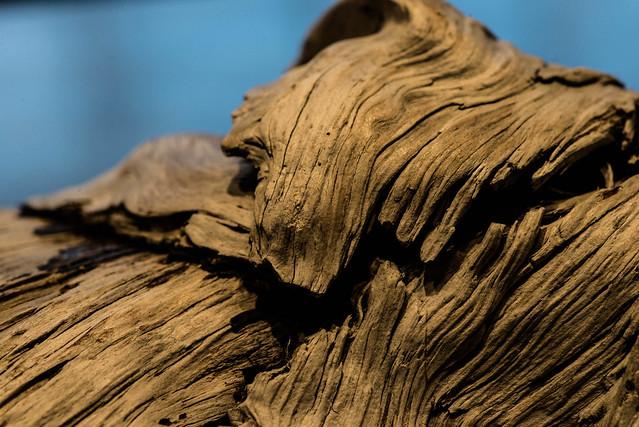 driftwood06