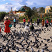 People Feeding Pigeons In Ulaanbatar, Mongolia