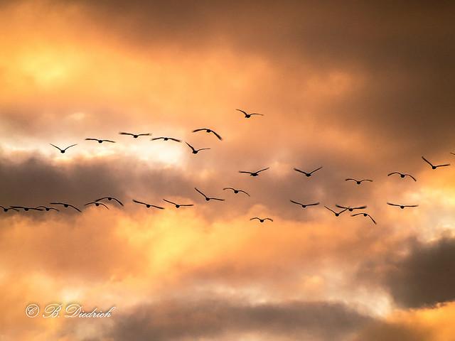 Abendlicher Vogelflug