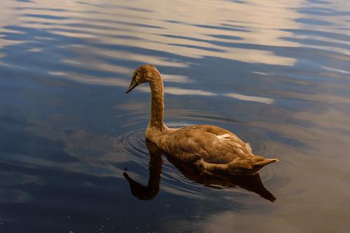 Atardecer en el Lago - Sunset on the Lake