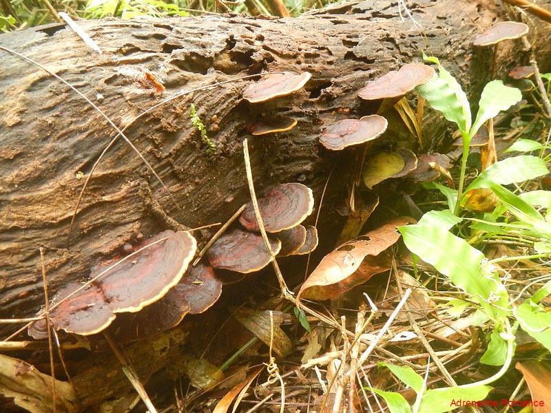Fungi!