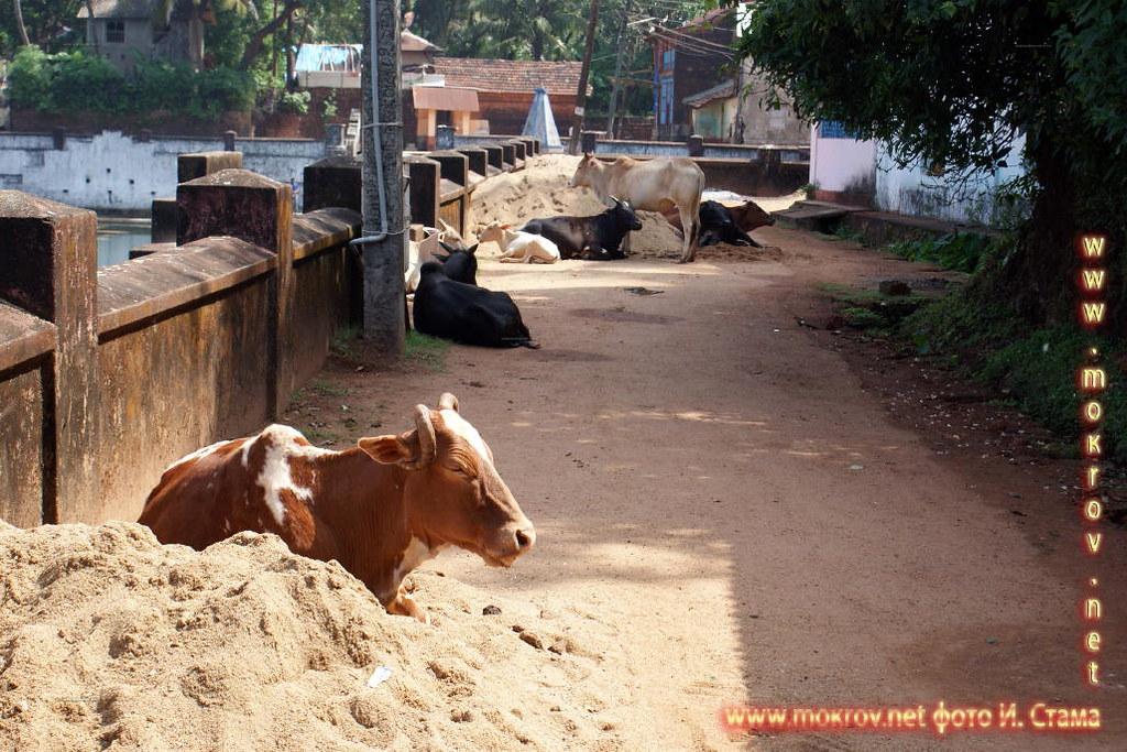 Индия штат Гоа, деревня Кондолим пейзажи