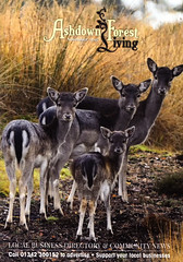 Ashdown Forest Living Nov 2017
