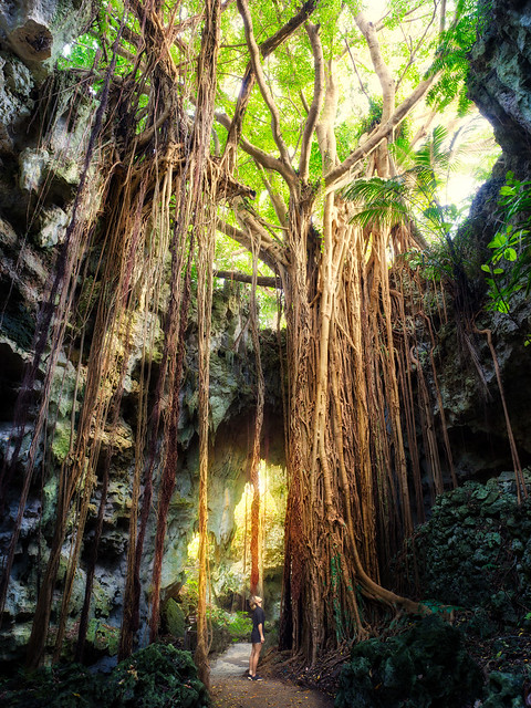 Okinawa Tree