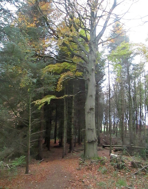 Balbirnie Estate trees