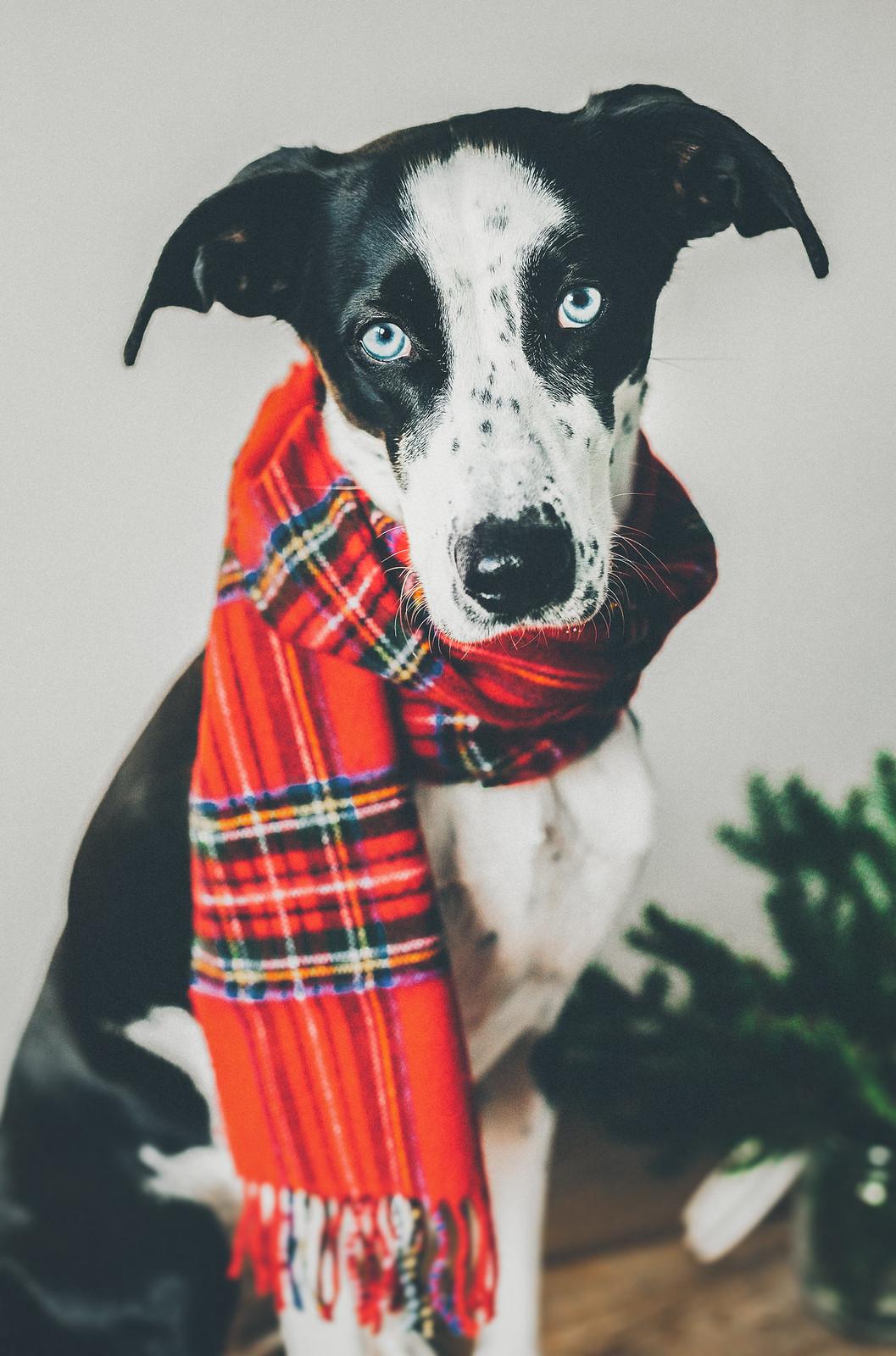 hunden elsie - karinevelina.se