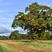 Round Wales Walk 106 (Offa's Dyke) - Fields of Powys