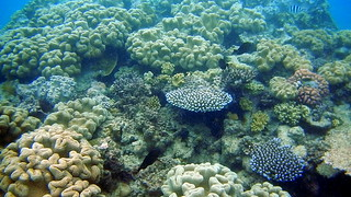 Diverse coral snorkelling on Opal Reef on the Great Barrier Reef