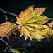 Leaf - LR6-300723-web