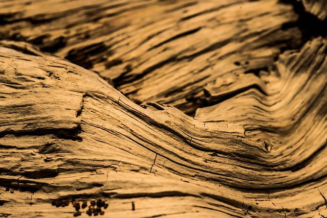 driftwood03