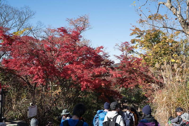20171119_高尾山_0152.jpg