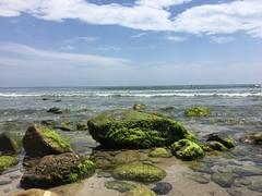 moss beach shoreline beautyofnature beautifulbeach peace sweetnature mothernature