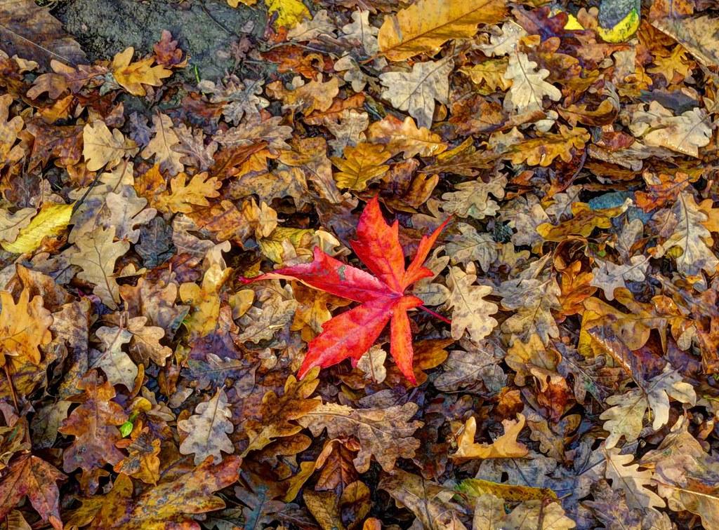Regents Park leaves