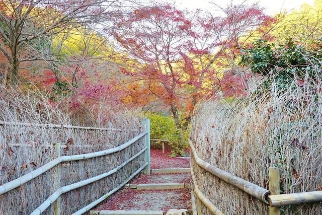 Tiny Bamboo Path / 京都 嵯峨 直指庵 Kyoto Kita-Saga Jikishi-an
