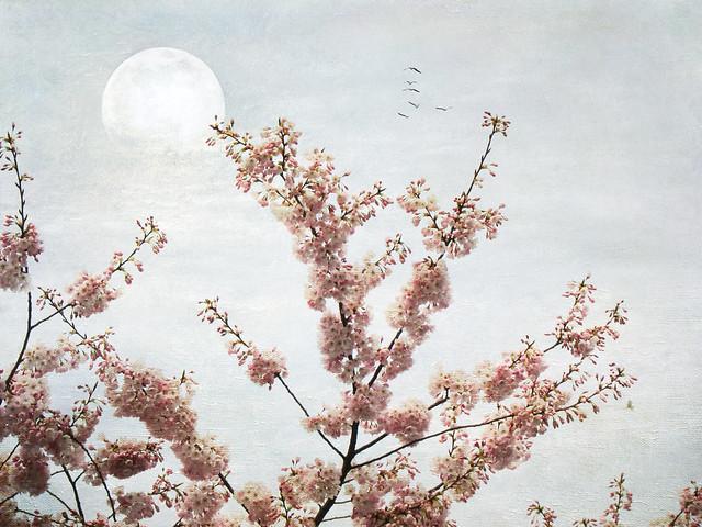 Sakura series