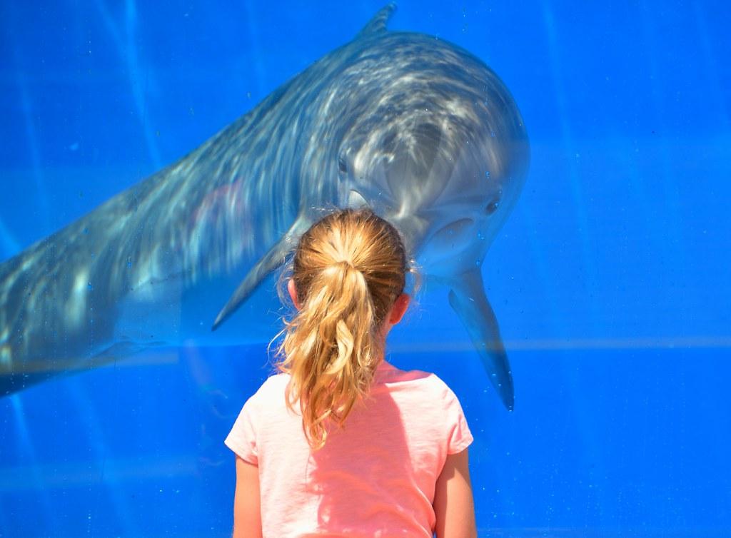 Delfín en un acuario