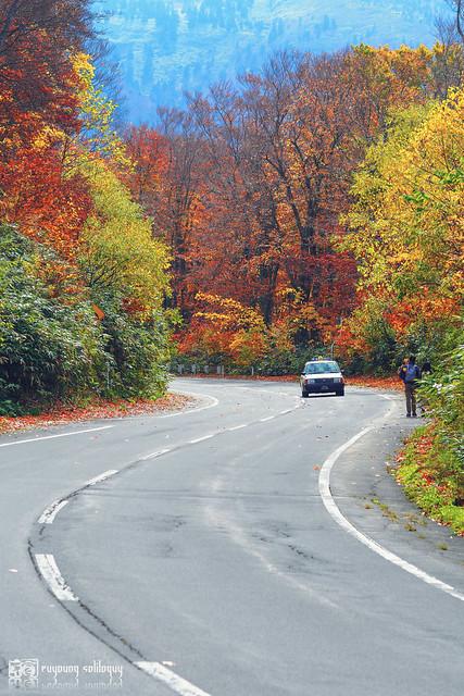 秋色是山巒中的一抹紅 | 10