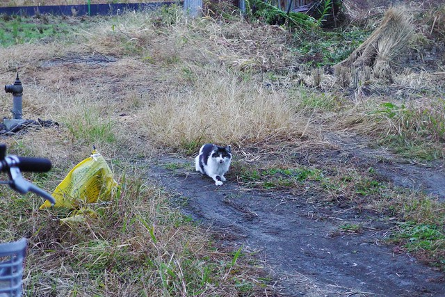 Today's Cat@2017-11-08