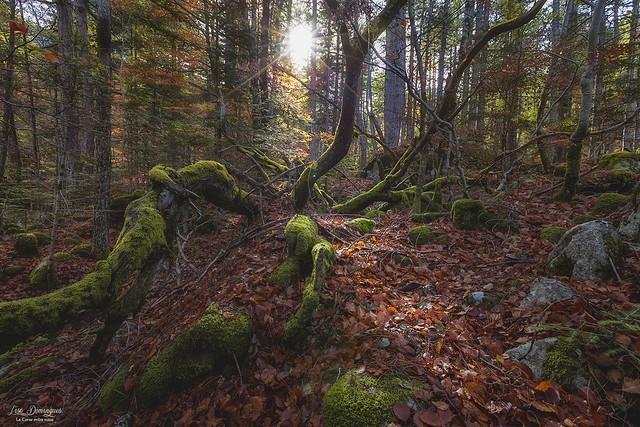 Route Forestière de Rivusecu...Centre Corse