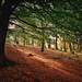 Autumn in Roddlesworth Woods, Lancashire