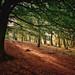 Autumn in Roddlesworth Woods, Lancashire