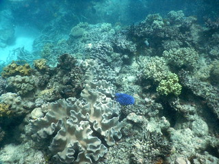 Opal Reef snorkelling on the Great Barrier Reef
