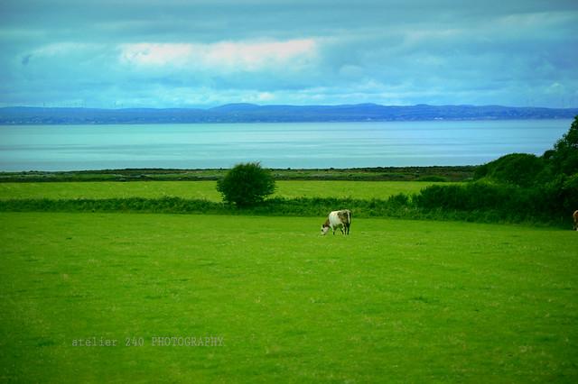 landscape - Ireland