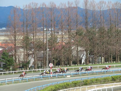 金沢競馬場の1コーナーを回り終わった馬たち