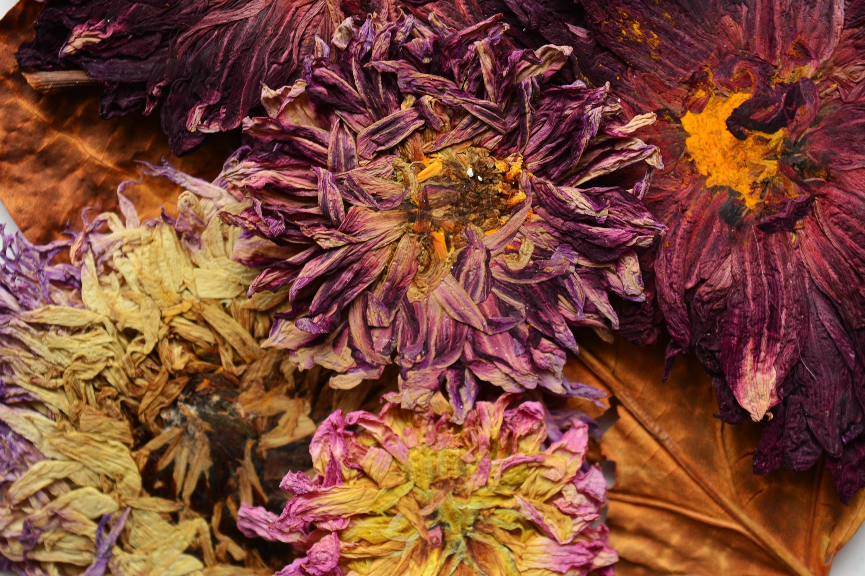 flori presate