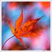 Autumn at the Arboretum-8175