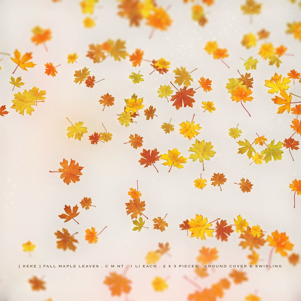 [ keke ] fall maple leaves