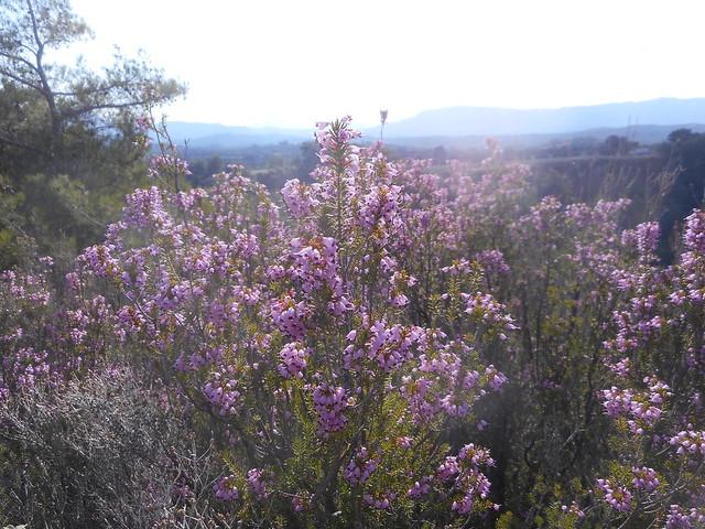 Φθινοπωρινό λιομάζωμα και το πρώτο ελαιόλαδο της φετινής χρονιάς