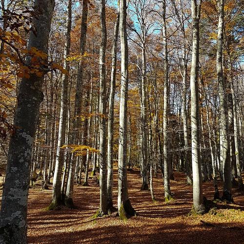 Herbst 20171014_150311