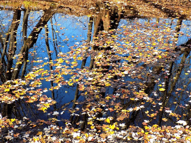 Reflection's of Nature