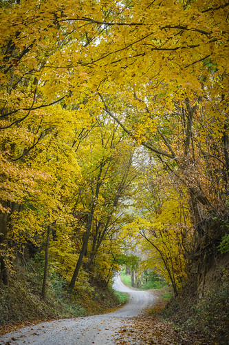 http://www.notleyhawkins.com/, Notley Hawkins Photography, Fall, leaves, color, woods, 2017, November, Columbia Missouri, Boone County Missouri, road, winding road, tree, Forest, gravel road, wood, rural, Old Plank Road class=