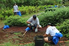 Hawaiian Electric at Hui o Koolaupoko's Kaha Garden Community Work Day - November 11, 2017: Clearing, weeding and planting!