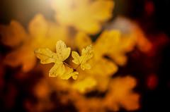 Herbstrausch