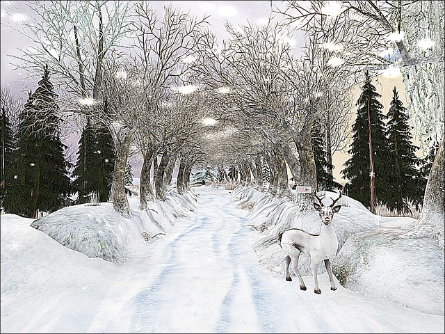 Advent Hunt 2017 Presented by Larnia - Tree Tunnel On A Winter's Day
