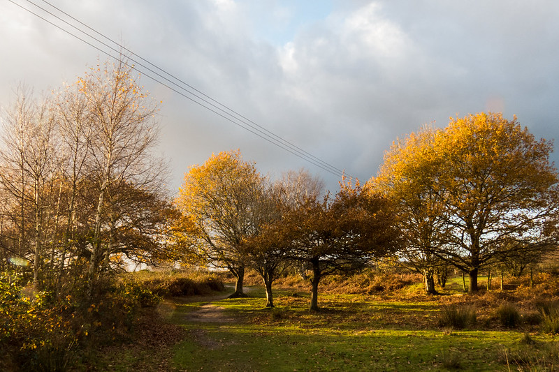 Upton Heath in the Autumn
