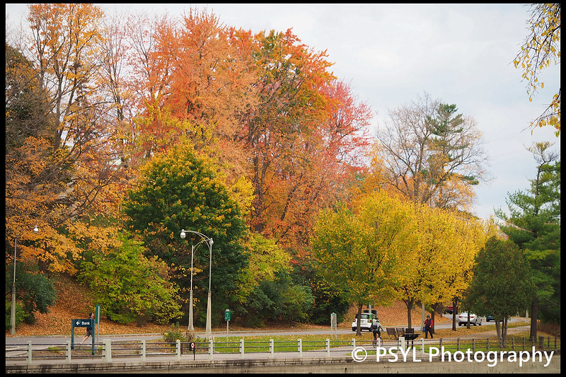 Autumn colours along Rideau Canal