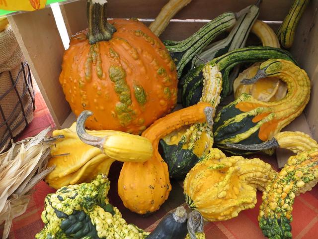 Gourd Assortment