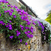 Flowers on Aston Rd (B4035) - Chipping Campden, England, UK