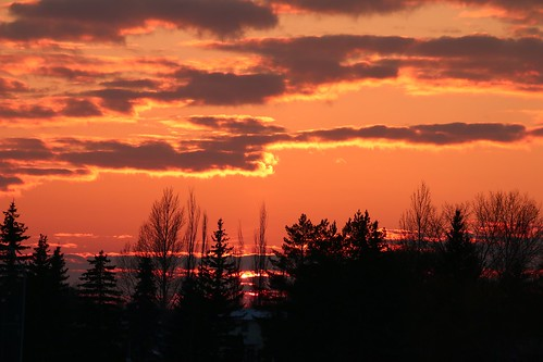 winter outdoors landscape horizon iamgrateful sotc clouds orange silhouette trees sky evening afternoon saskatchewan saskatoon sunset