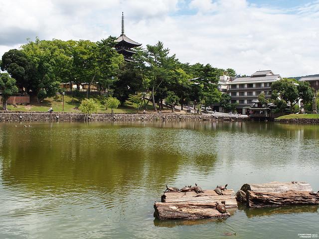奈良 猿澤池