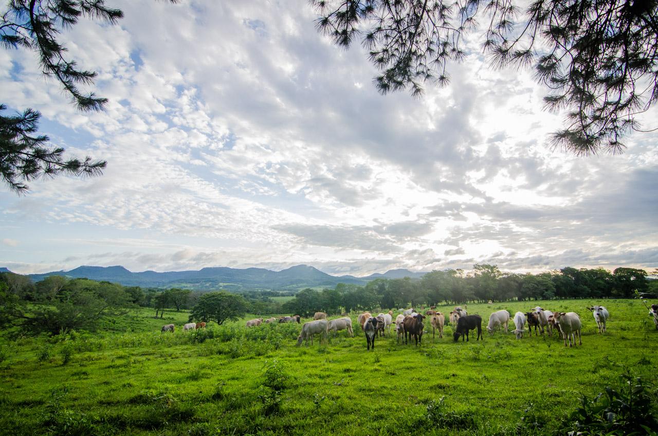 Una vista del paisaje del distrito de Colonia Independencia, hermosos pastizales y arboledas de pino pueden verse a lo largo del recorrido por estas zonas. (Elton Núñez).