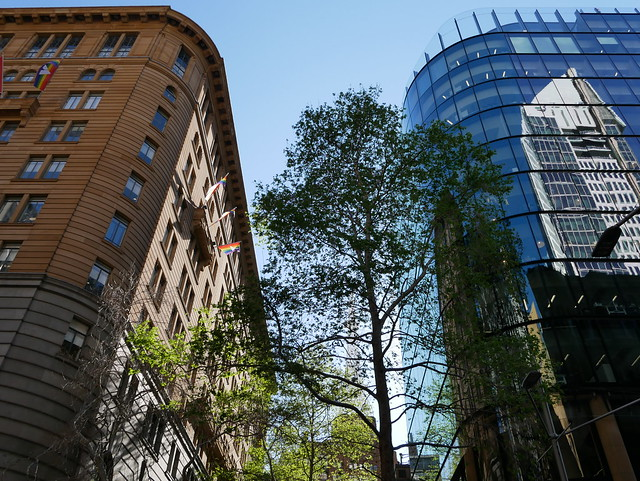 Sydney CBD Tree between Buildings - Panasonic GX 850