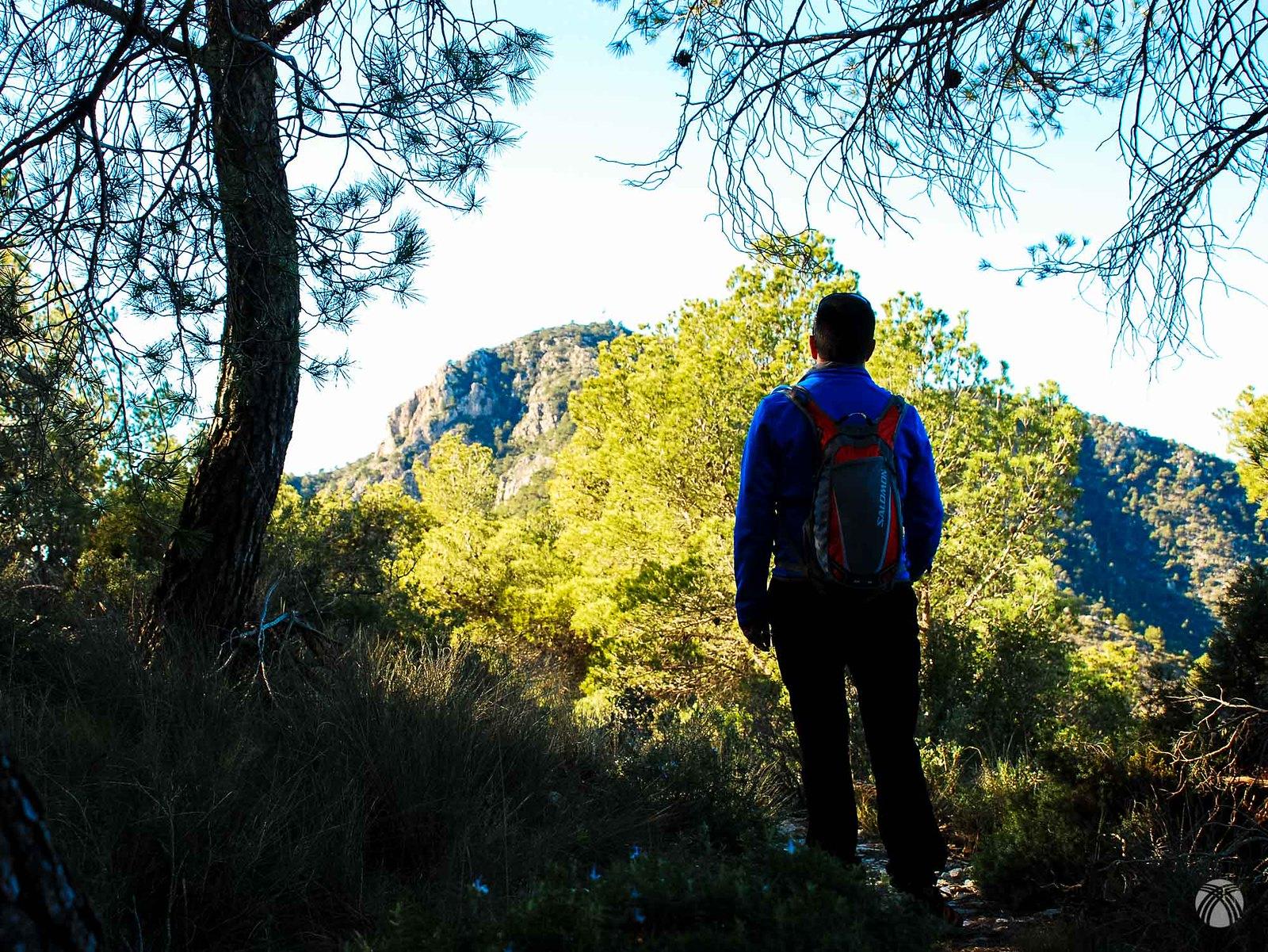 Primeros pasos entre pinos con la cumbre al fondo