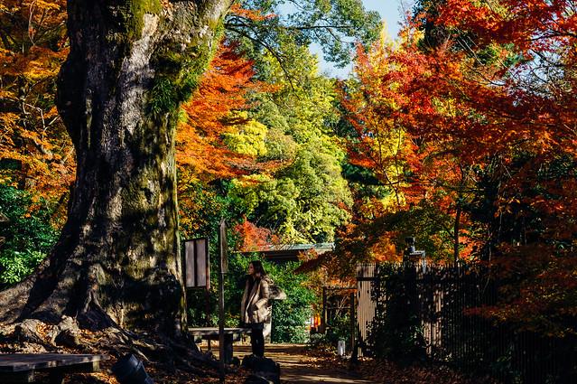 Kyoto_Kitano_04_55mm