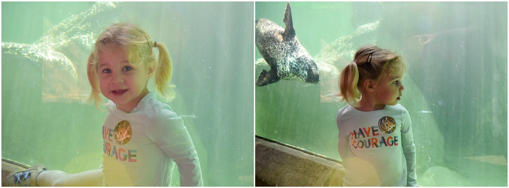 hannah and the seals