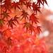 雨と紅葉 by * Yumi *
